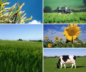 tarım genel resim